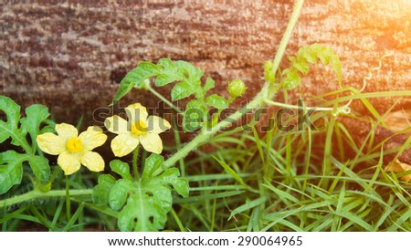 ivy plant on Wooden - stock photo