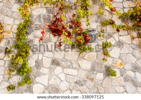 ivy vines ranking on a stone wall - stock photo