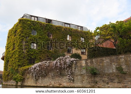 Ivy walls one of the colleges. View from Cam river. Cambridge. UK. - stock photo