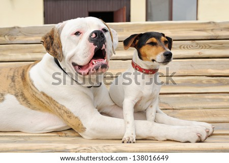 Jack russel terrier and American bulldog  lying on a bench - stock photo