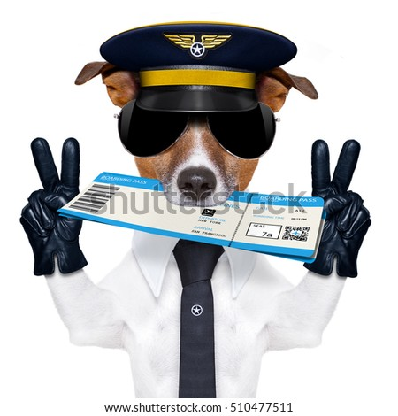 jack russell airline pilot or  flight attendant dog , with check in boarding pass ticket in mouth , isolated on white background, peace and victory fingers