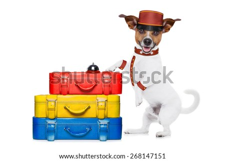 jack russell bellboy dog with stack of luggage at hotel, where pets are welcome and allowed,isolated on white background - stock photo