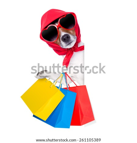 jack russell diva dog with a bunch of shopping bags ready to buy everything on sale and with discount, isolated on white background - stock photo