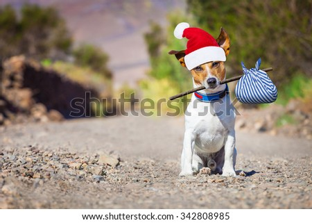 jack russell dog abandoned and left alone  on the road with santa hat on christmas holidays   - stock photo