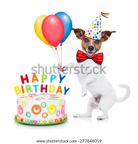 jack russell dog  as a surprise with  happy birthday cake ,wearing  red tie and party hat ,holding balloons , isolated on white background - stock photo