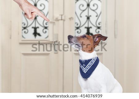 jack russell dog being punished by owner for very bad behavior , with finger pointing at dog - stock photo
