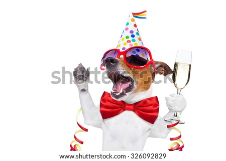jack russell dog celebrating new years eve with champagne and singing out loud, isolated on white background - stock photo
