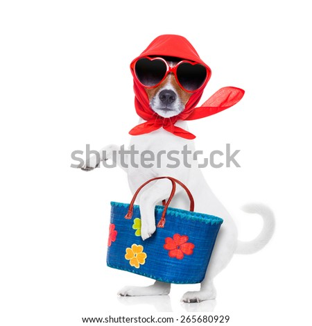 jack russell dog diva lady with bag shopping at supermarket , isolated on white background - stock photo