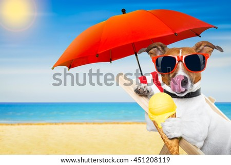 jack russell dog eating ice cream on a cone waffle on a beach chair or hammock with sunglasses on summer  vacation holidays