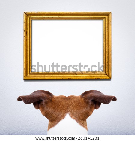 jack russell dog from back behind , in front of a blank and empty old retro frame, paying attention for the important message,on a white home wall - stock photo