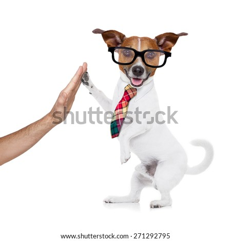 jack russell dog high five with paws with hand of owner , happy and celebrating their success as a partner and   business team  , isolated on white background - stock photo