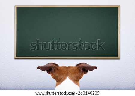jack russell dog in front of blackboard, learning at school and training - stock photo