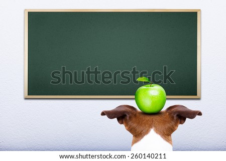 jack russell dog in front of blackboard, learning at school balancing a green apple on the head - stock photo