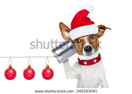 jack russell dog listening carefully what you have to say   on the tin can telephone or phone, isolated on white background on christmas holidays - stock photo