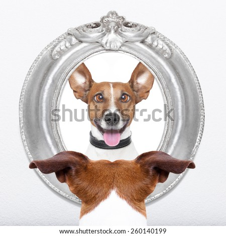 jack russell dog looking at the mirror his  crazy silly funny face - stock photo