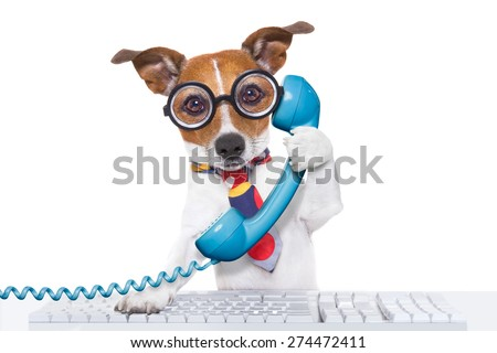 jack russell dog on  a call center using the phone or telephone and computer pc  keyboard , isolated on white background - stock photo