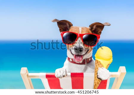 jack russell dog  on hammock at the beach relaxing  on summer vacation holidays,  eating a fresh lemon or vanilla ice cream on a cone waffle