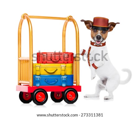 jack russell dog pushing a hotel Luggage Cart or trolley full of luggage and bags, ready to check in , in a pet friendly hotel, isolated on white background - stock photo