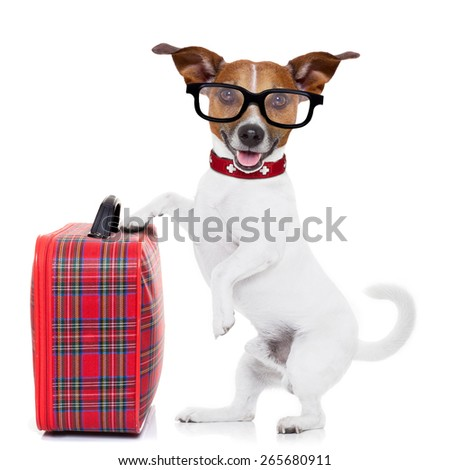 jack russell dog ready to leave for summer vacation or holidays  with fancy red luggage or suitcase, isolated on white background