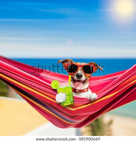 jack russell dog relaxing on a fancy red  hammock  with caipirinha cocktail on summer vacation holidays