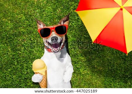 Creamy fiji doggy underneath closeup creamy 9