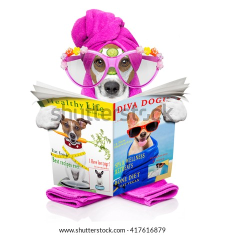 jack russell dog relaxing  with beauty mask and reading a magazine or newspaper at spa wellness center - stock photo