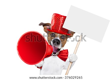 jack russell dog ,shouting  and advertising  sale discount  with retro megaphone or big microphone holding white blank placard or blackboard, isolated on white background - stock photo