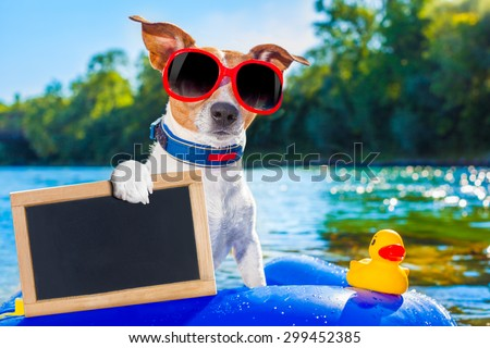 jack russell dog sitting on an inflatable  mattress in water by the  sea, river or lake in summer holiday vacation , holding an empty banner or placard - stock photo