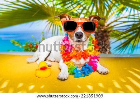 jack russell dog under the shadow of a palm tree relaxing and resting