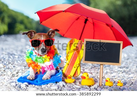 jack russell dog under umbrella at beach with rubber ducks, on summer vacation holidays , blank placard or blackboard on the side - stock photo
