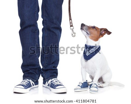 jack russell dog waiting for owner to play  and go for a walk with leash - stock photo