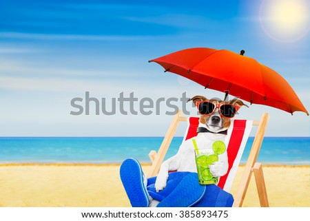 jack russell dog with caipirinha cocktail  on a beach chair with sunglasses under umbrella , on summer vacation holidays - stock photo
