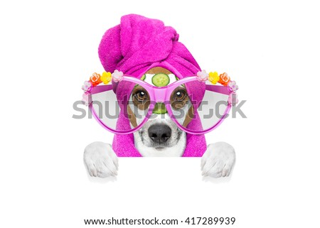 jack russell dog   with cucumber  mask in spa wellness beauty center  isolated on white background behind blank empty banner or placard