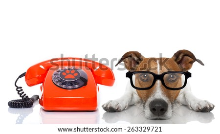 jack russell dog with glasses as secretary or operator with red old  dial telephone or retro classic phone - stock photo
