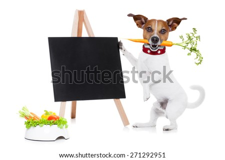jack russell dog  with  healthy  vegan or vegetarian food bowl, holding a blank empty blackboard,carrot in mouth , isolated on white background