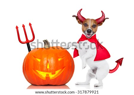jack russell halloween dog dressed up as devil holding a pumpkin , isolated on white background - stock photo