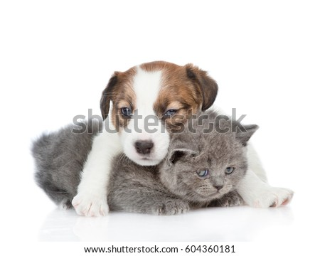 Jack russell puppy hugging a kitten.  isolated on white background