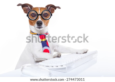 jack russell  secretary dog booking a reservation online using a pc computer laptop keyboard , isolated on white background - stock photo
