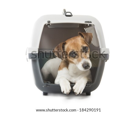 Jack Russell Terrier dog inside a special plastic gray crate animal. White background. Studio shot. - stock photo