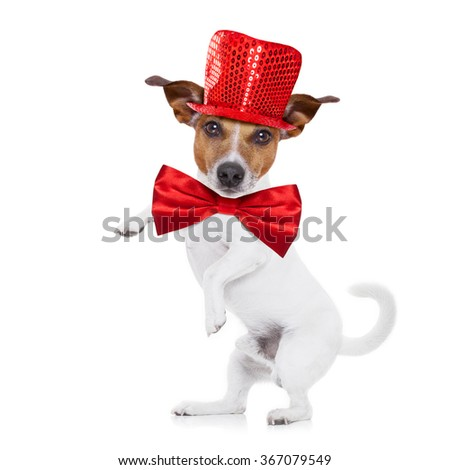 jack russell terrier dog isolated on white background , funny party hat and tie