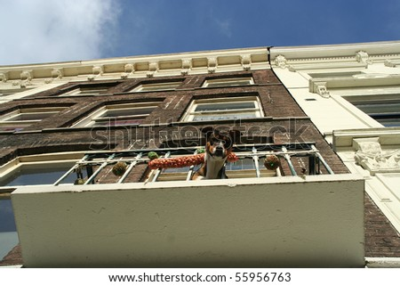 Jack Russell Terrier on the balcony, Netherlands - stock photo