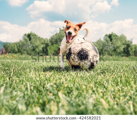 Jack Russell Terrier play with big old ball - stock photo