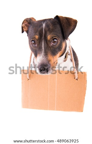 Jack Russell Terrier with a sign on a white background;