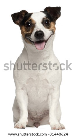 Jack Russell Terrier, 3 years old, sitting in front of white background - stock photo