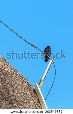 Jackdaw sitting on a pole on a thatched roof - stock photo