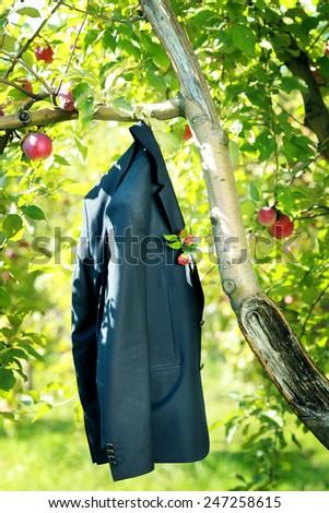 Jacket on the apple tree - stock photo