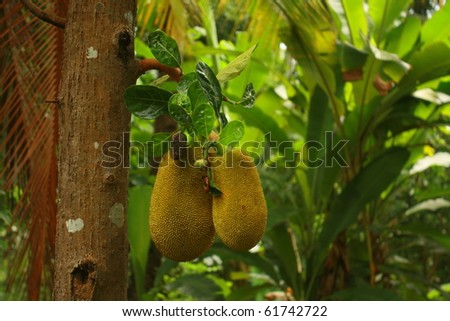 Jackfruit - stock photo