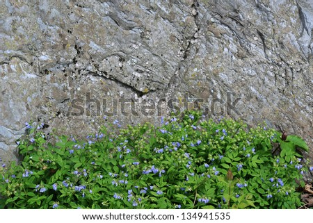 Jacob's Ladder With a Large Stone Background Horizontal With Copy Space - stock photo