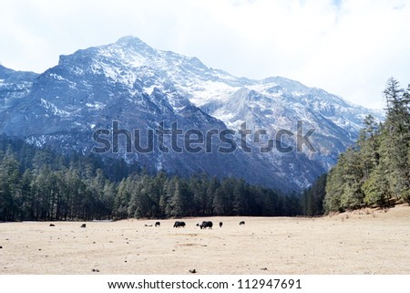 Jade Dragon Snow Mountain or Mount Yulong nature landscape mountain range, moody sky and foggy in western china - stock photo