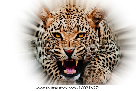 stock-photo-jaguar-attacking-out-of-whit